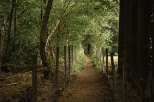 Read more about the article The Growing Importance of Rail Trails